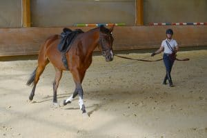 Die Ausbildung des jungen Reitpferdes Teil 1
