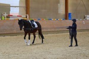 Die Ausbildung des jungen Reitpferdes Teil 2