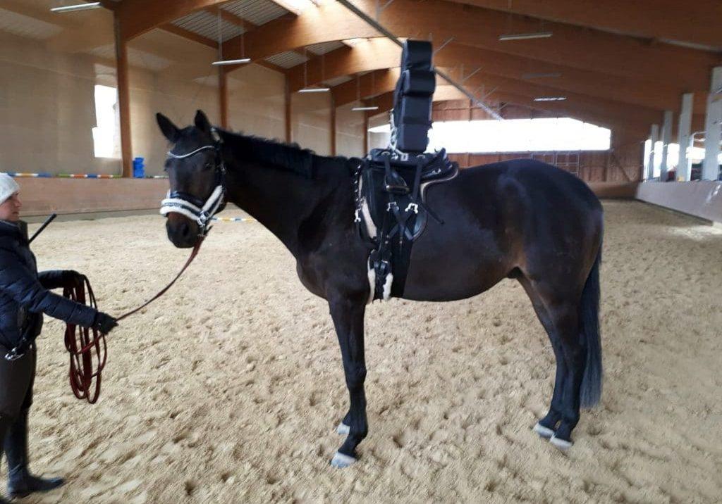 ArdallSR2_Pferd